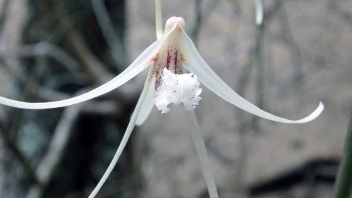 Individual orchid flower