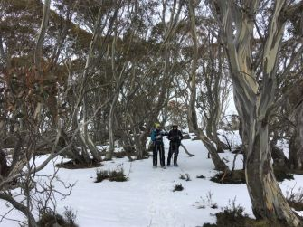 Another beautiful snow gum forest
