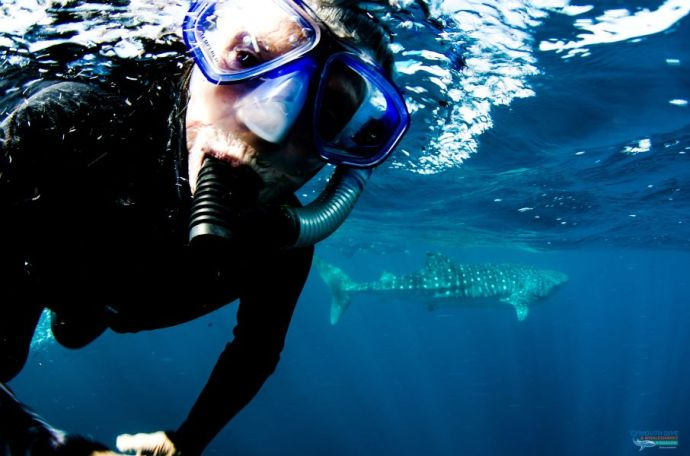 2018 Diving with whale sharks on Ningaloo Reef, WA