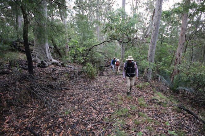 Walking along the overgrown sidetrack