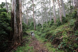 This is what bushwalking is all about !