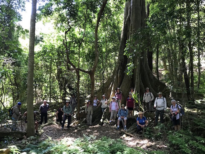 Group photo with the Strangler Fig in the Rainforest Gully