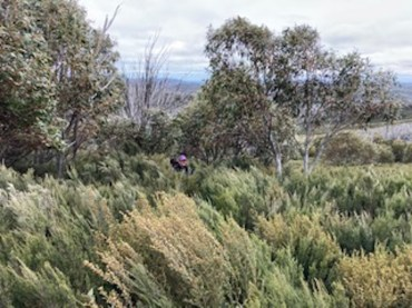 Where's Donna? In the heath on the way to Mt Jagungal