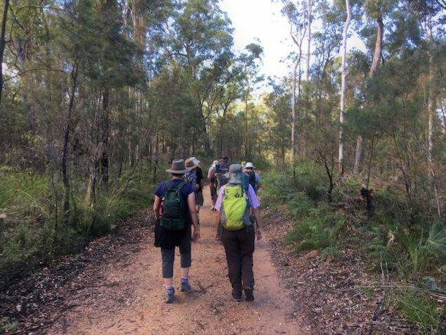 Quiet forest track through regenerating vegetation
