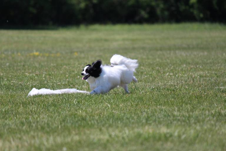 Lure-Coursing-1