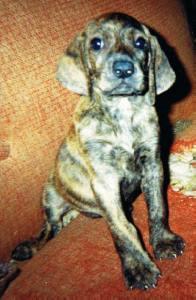 10 Garnet 2004