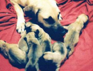 6 Pearl and 1st litter of pups 2002