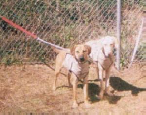 Hazel & Cotton -- Uncle Earl's -- Puppy Bay