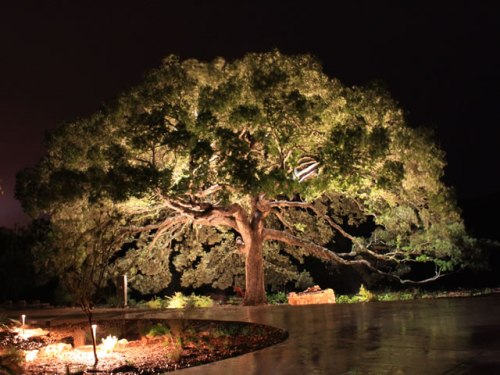 Baylites - outdoor landscape lighting - tree up lighting