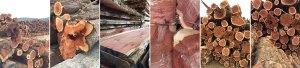 Cedar Mill images