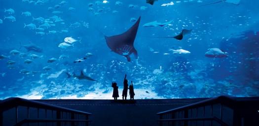 Bể cá khổng lồ trong Thủy cung SEA Aquarium