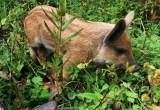 Фото трава и поросёнок
