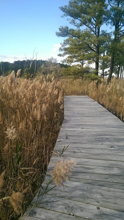Chesapeake Bay Environmental Center outdoor hiking trail