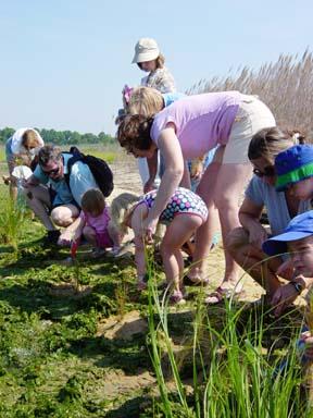shore grass plantings