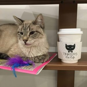 A cat sits on a shelf outside Tinker's Cat Cafe