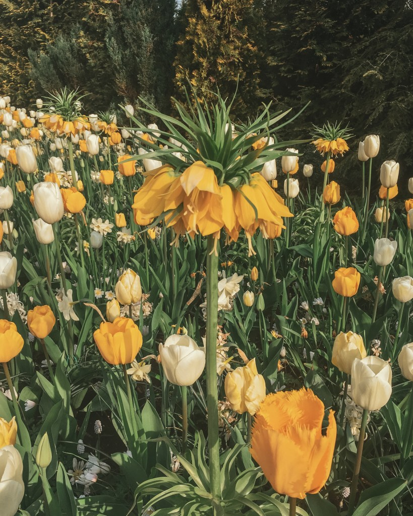 Tulip Fields at Keukenhof