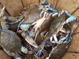 crabs in basket