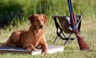 Gun Dog Retreiver Training Northern California