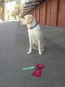 Shasta 2nd place Agility