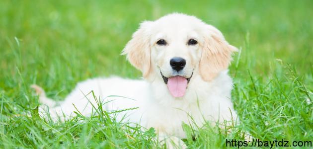 تربية الكلاب في الإسلام