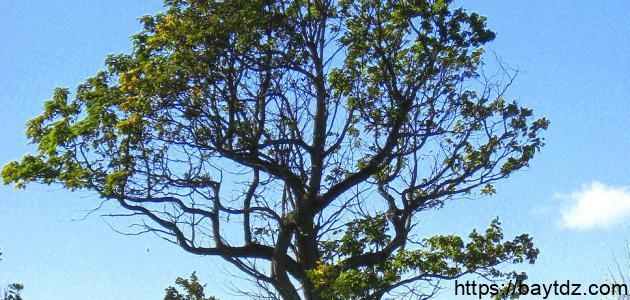 فوائد الشجرة وأهميتها