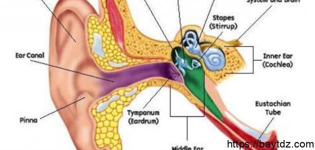 أعراض التهاب عصب التوازن