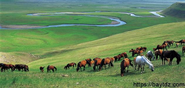 أين تقع منغوليا بيت Dz