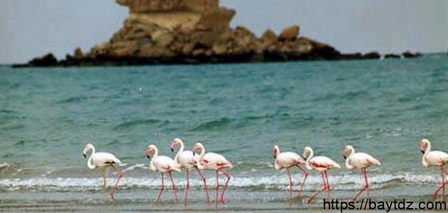 جزيرة قشم إيران