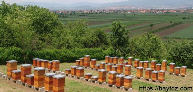 طريقة تربية النحل