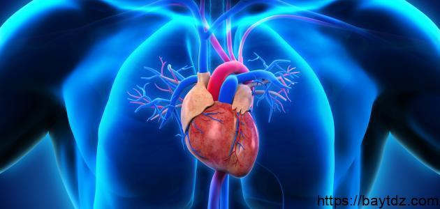 علاج تضخم القلب
