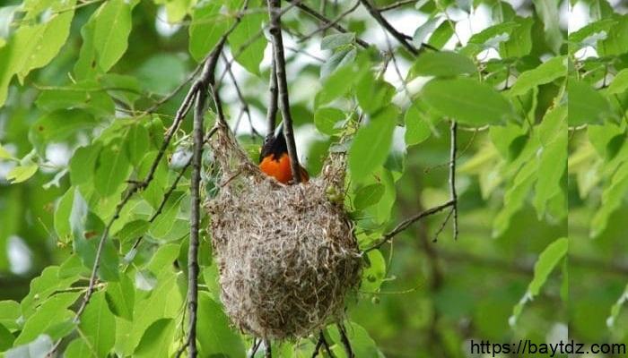 أنواع أعشاش الطيور