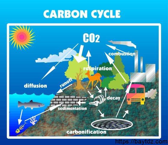 خصائص مشتركة بين دورة الماء ودورة الكربون