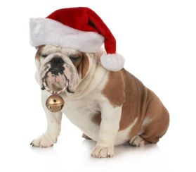 Bulldog sends best wishes
