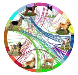 Research found the connections and origins behind some of the most popular breeds. (NIH Dog Genome Project)