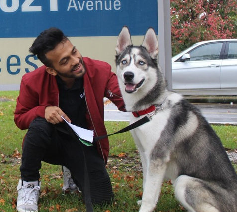 """""""Sober"""" reunited with owner by Toronto Animal Services"""