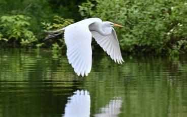 Breathtaking images of wildlife on eastern shore