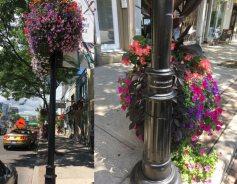 Mount Pleasant Village BIA flower poles