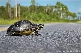Povestea broscuței țestoase Tobias