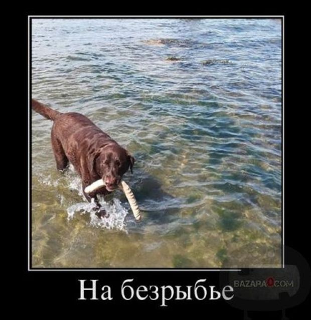 Bazara0_Demotivators(6)