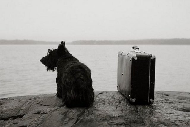 Kristoffer Albrecht Dog with suitcase 1982  e1593867563121 - Мечты Молли