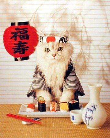 Sushi Cat cats 24320484 359 450 - 花見