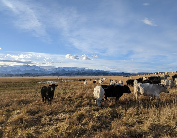 pasture raised all year long, Grass Fed Organic Beef
