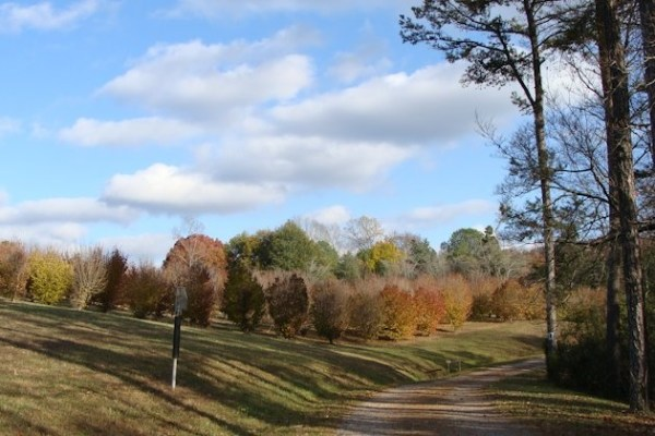 UT Arboretum Society to Hold Father-Daughter Hike