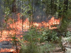 Park Fire Update