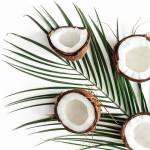 Coconut Vetiver