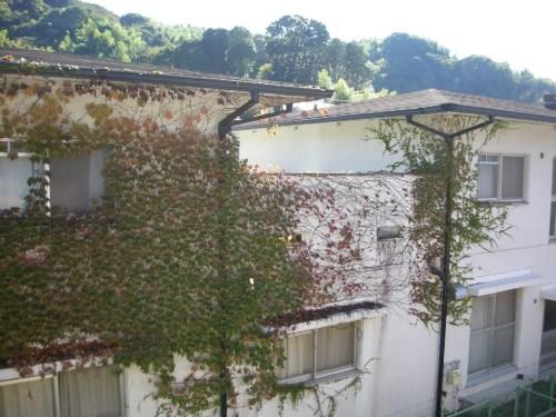 窓枠の風景(2010年11月5日)
