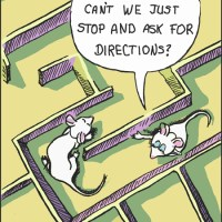 Two mice walk into a maze ...