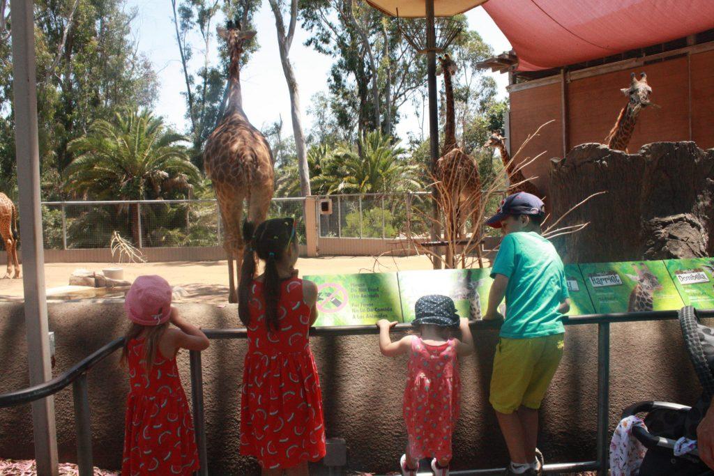 Zoo de San Diego en famille © Geneviève Morin