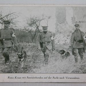 B117. WWI GERMAN POSTCARD WITH RED CROSS MEDICAL DOGS