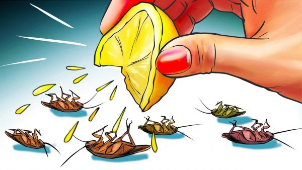 how to get rid of roaches overnight